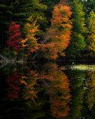 Fall Foliage Reflection, Adirondacks Park New York