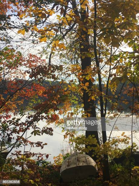 Fall foliage with red, yellow leaves by the shore