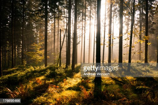 Fall Forest with Sunrays