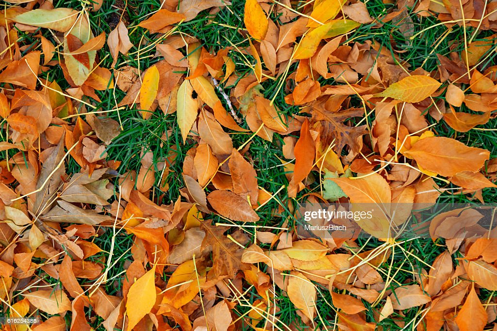 Fall leafs on grass : Foto de stock