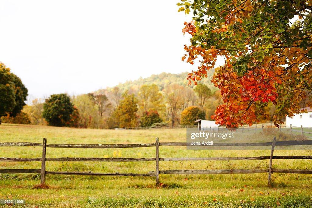 Fall Leaves Autumn Colors Fall Foliage