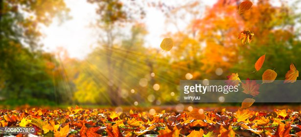 fall leaves in idyllic landscape : Foto de stock