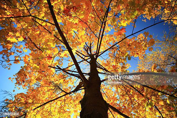 Fall leaves on the autumn tree