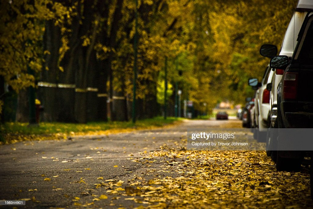 Fall leaves on the street : Stock Photo