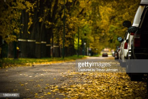 Fall leaves on the street : Stockfoto