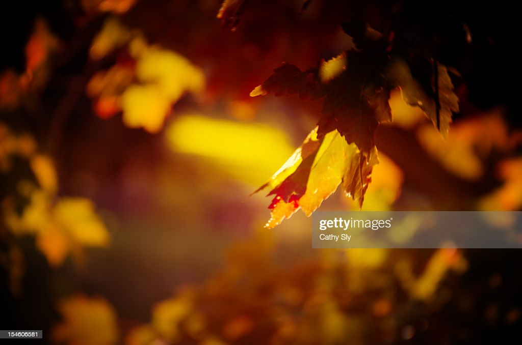 Fall Leaves : Stock Photo