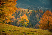 Astonishing landscape of mountain mixed forests and valleys on a sunny day in Fall.