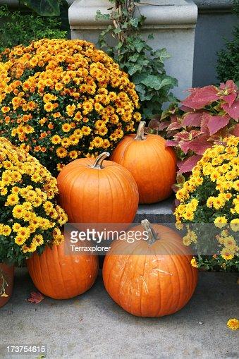 Fall still life with orange pumpkins and yellow perennials