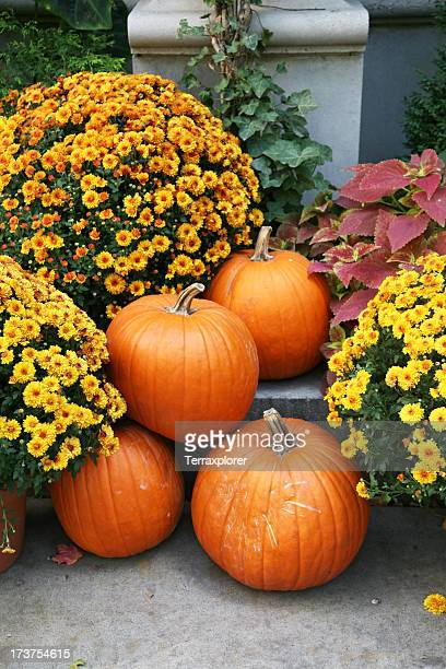 Fall still life with orange pumpkins and yellow perennials