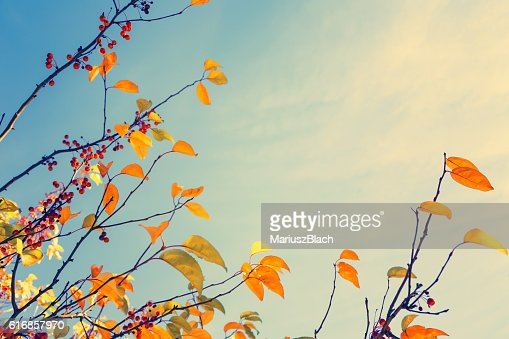 Fall tree background : Stock Photo
