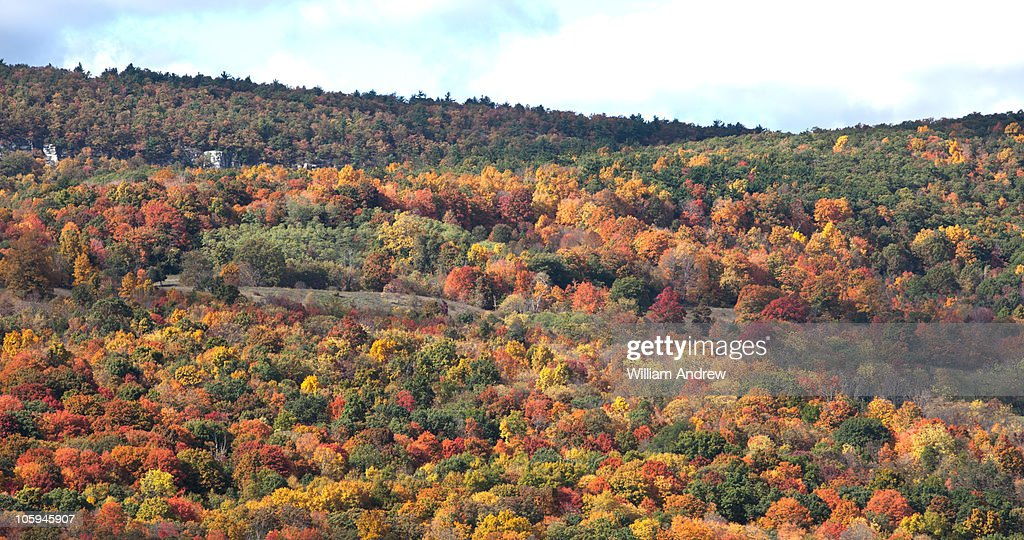Fall tree colors in upstate New York : Stock Photo