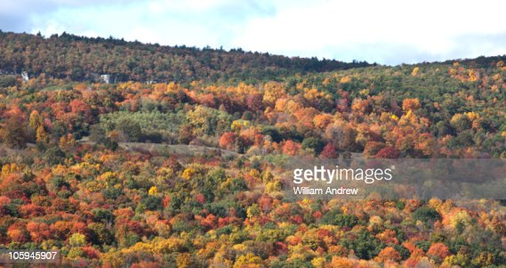 Fall tree colors in upstate New York : Foto de stock
