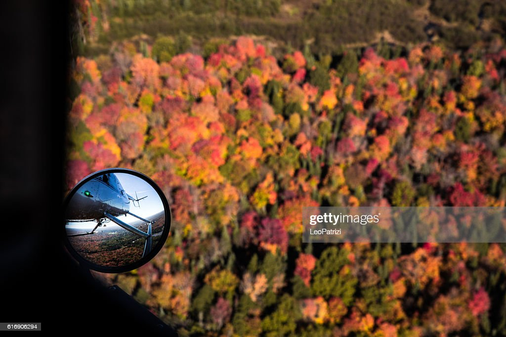 Fall trees in Canadian Parks - Algonquin Park - Ontario : Stock Photo