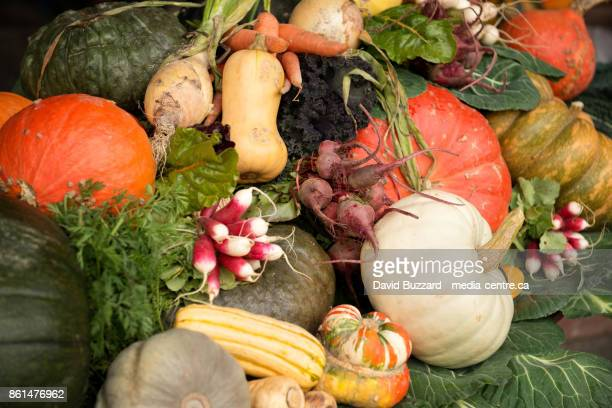Fall vegetables on display.  Squash, pumpkin, carrots, beets, turnips, kale, and curries.