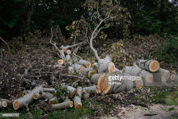 Fallen and cut down trees are seen near the city center on 20 August 2017 Recent storms have caused severe damage to over 110 thousand acres in the...