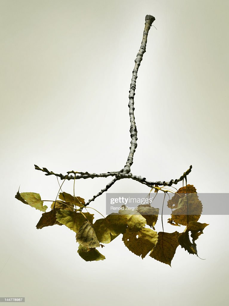 Fallen dried branch. : Stock Photo