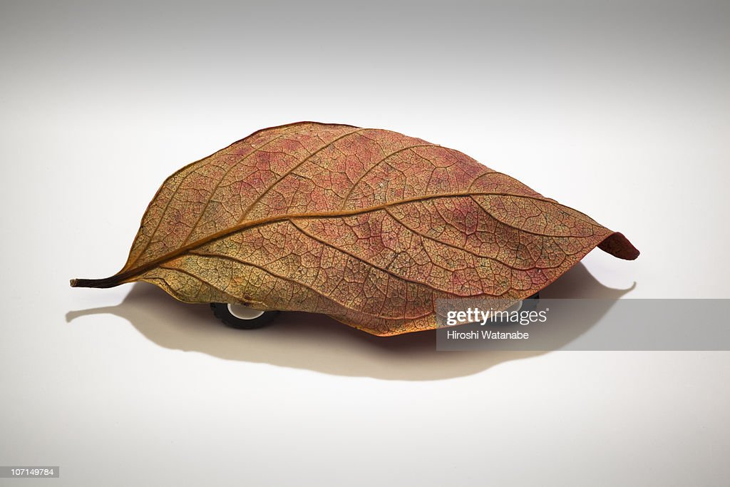 Fallen leaf with tires : Stock Photo