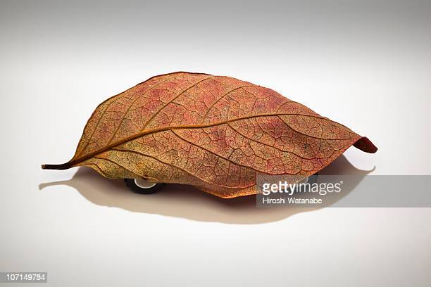 Fallen leaf with tires