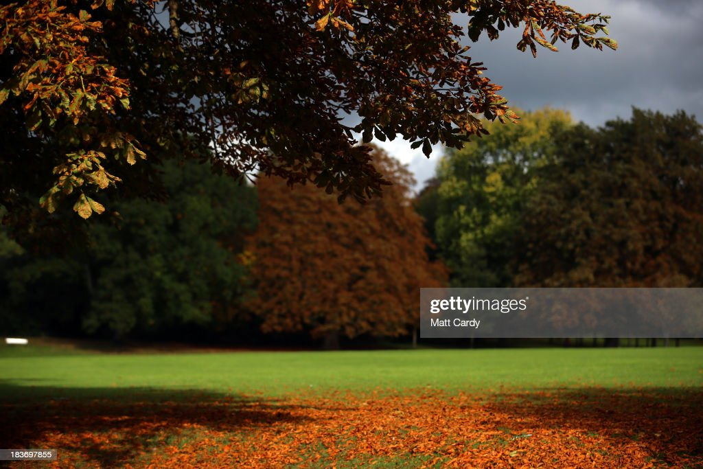 Fallen leaves are seen as the trees begin to take on their autumn colours in The Royal Victoria Park on October 9, 2013 in Bath, England. Although later than normal, experts at the Forestry Commission are predicting a spectacular autumn this year due to a ideal mix of sunshine and rain which has meant a great growing season for the nations trees, providing perfect conditions for the sugars to build up in the leaves that help them change colour and develop their vibrant autumn hues.