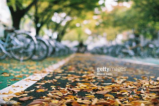 Fallen leaves on bicycle parking ground
