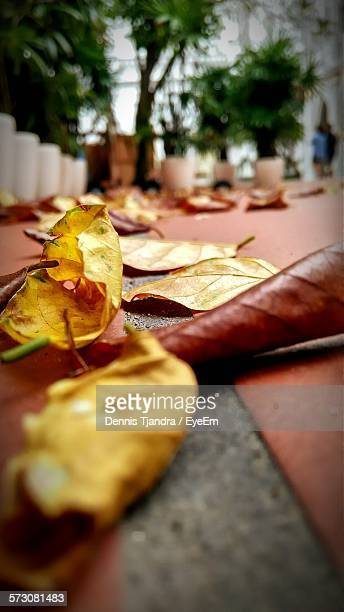 Fallen Leaves On Footpath