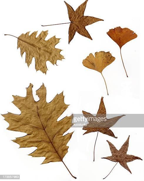 Fallen の葉