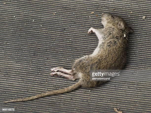 Fallen mouse
