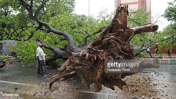 A fallen Neem tree after a dust storm followed by rain at KG Marg near Maharshtra Sadan on June 13 2015 in New Delhi India The change of weather in...
