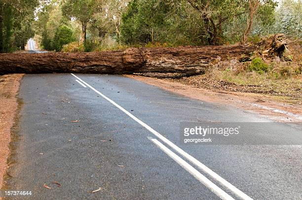 Fallen Tree Blocking the Road