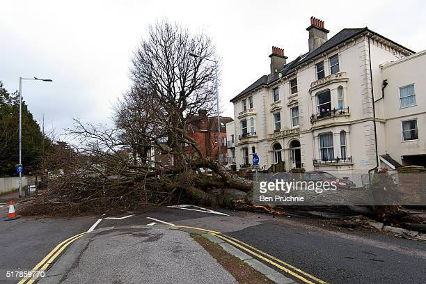 A fallen tree blocks a road on March 28 2016 in Brighton England Yesterday the Met Office issued an amber warning for winds for London and southeast...