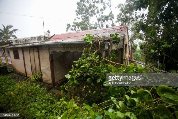 Fallen tree branches partly cover a small wooden house in the village of Viard Petit Bourg near PointeaPitre on September 19 2017 in the French...