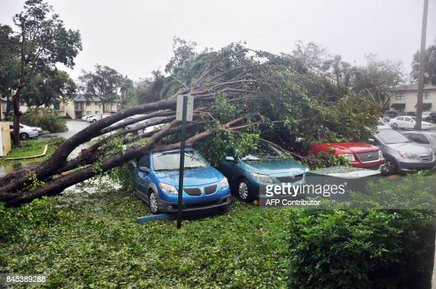 A fallen tree crashes atop a row of cars on September 10 2017 Miami Florida in the wake of Hurricane Irma Hurricane Irma's eyewall slammed into the...