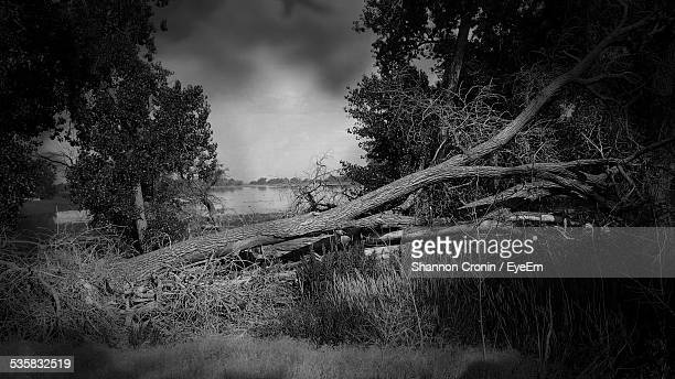 Fallen Tree In Forest