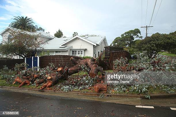A fallen tree lays across a property in Collaroy on April 22 2015 in Sydney Australia Three people have died and more than 200000 are still without...