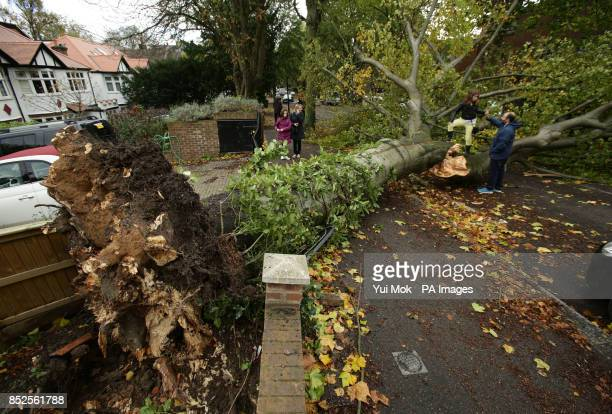 A fallen tree lying across the road in Shepherd's Hill north London due to the storm affecting parts of the UK