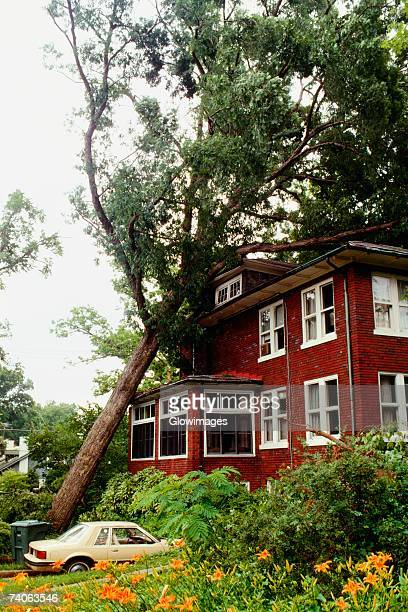 Fallen tree on a house, Washington DC, USA