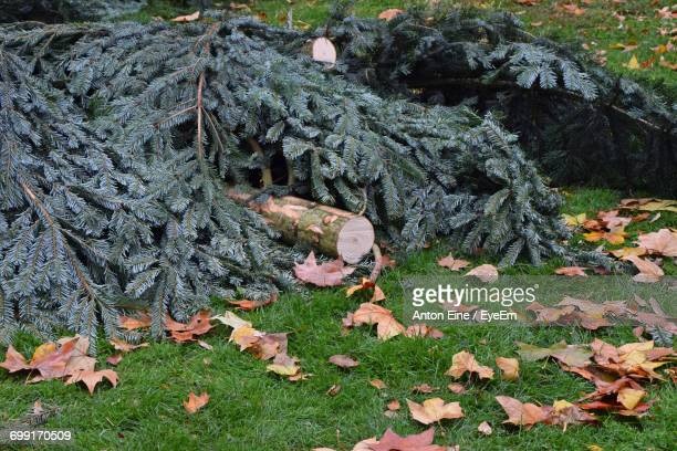 Fallen Tree On Grassy Field During Autumn