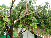 Fallen tree on the roof after big storm
