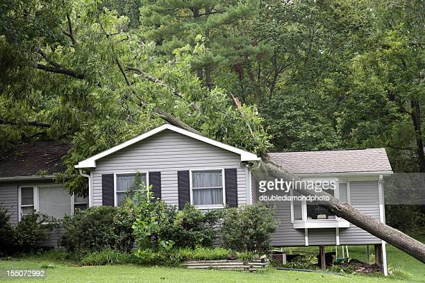 Fallen tree on top of grey bungalow house