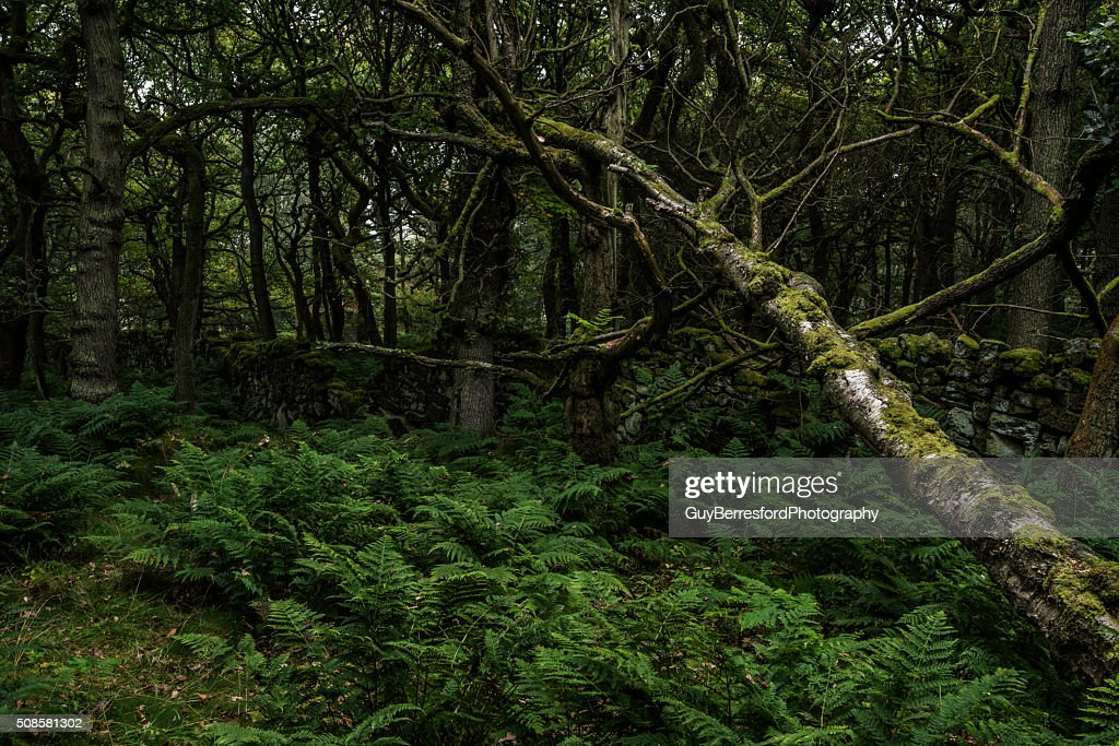 Fallen tree : Stock Photo