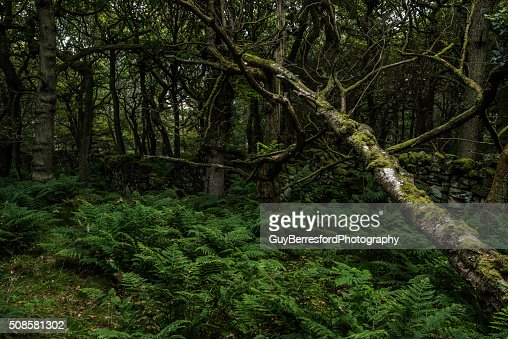 Baumstamm am Boden : Stock-Foto
