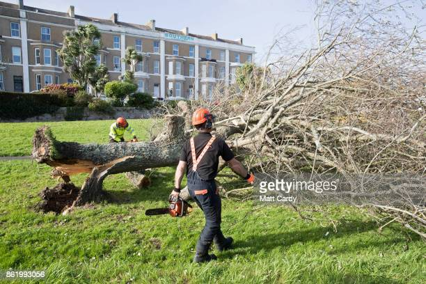 A fallen tree that was uprooted by Hurricane Ophelia is cut up in Penzance on October 16 2017 in Cornwall England Hurricane Ophelia comes exactly 30...