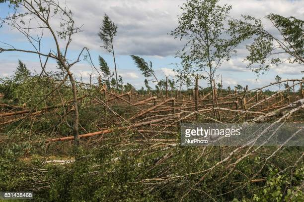 Fallen trees in the forest are seen near the Nakla village northern Poland on 14 August 2017 Storms which on Friday 11th August night and Saturday...