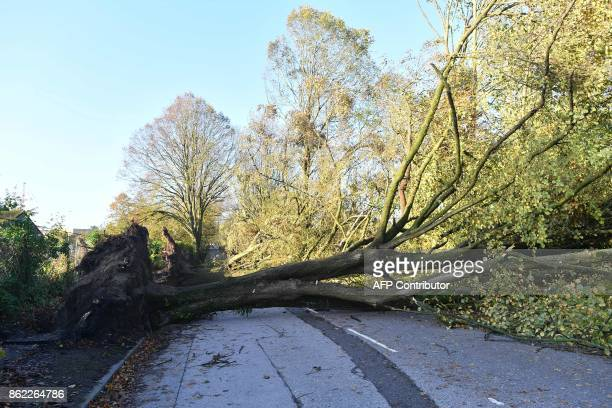 Fallen trees that were blown down by Storm Ophelia are seen blocking a road in Irelands southwest city of Cork on October 17 2017 Ireland was hit by...