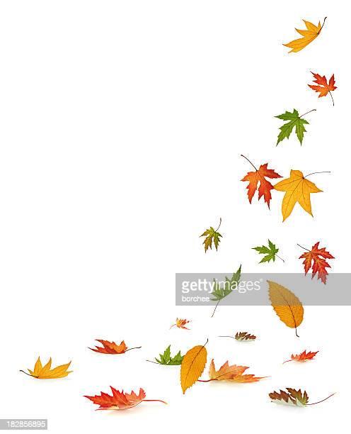 Falling 秋の葉に白背景