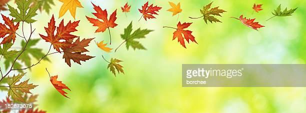 Falling 秋の葉のパノラマビュー