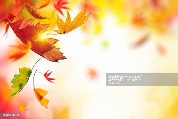 Chute feuilles d'automne