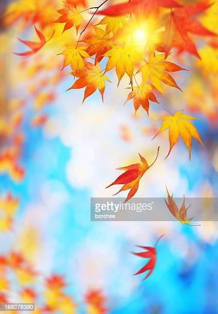Falling 秋の葉