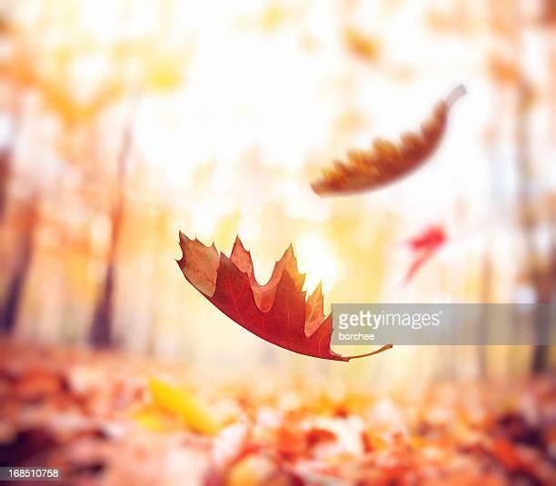 Fallende Herbst Blätter