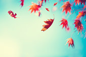 Colorful autumn leaves falling from trees.